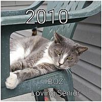 Adopt A Pet :: Boz - Smithtown, NY