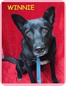Labrador Retriever Dog for adoption in Batesville, Arkansas - Winnie
