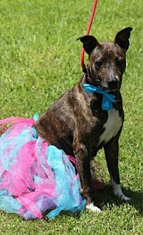 Mountain Cur Mix Dog for adoption in Beaumont, Texas - Rose
