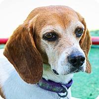 Adopt A Pet :: Leah - Houston, TX