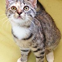 Adopt A Pet :: Kelsey - Youngsville, NC