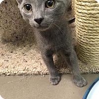 Adopt A Pet :: Damien - Virginia Beach, VA