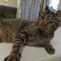 Adopt A Pet :: Cinder - Orleans, VT