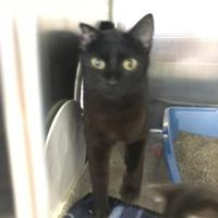 Adopt A Pet :: Mary - Manitowoc, WI