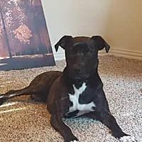 Adopt A Pet :: Gemma - Okmulgee, OK