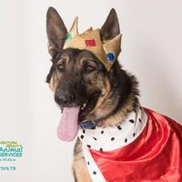German Shepherd Dog Dog for adoption in Camarillo, California - *DIEGO