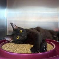 Adopt A Pet :: Salem - Kinston, NC