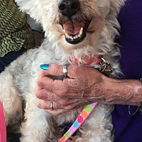 Adopt A Pet :: Chime - Sugar Grove, IL