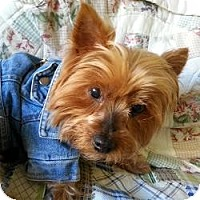 Adopt A Pet :: Daisy - Hardy, VA