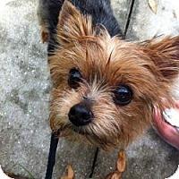 Adopt A Pet :: Cruze - Bunnell, FL