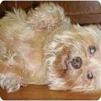 Adopt A Pet :: Marina - Madison, WI