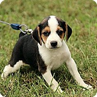 Adopt A Pet :: Grayson - Staunton, VA