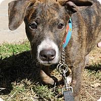 Adopt A Pet :: Thumper - Chicago, IL