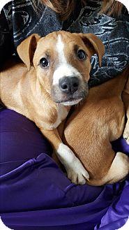 Shepherd (Unknown Type) Mix Puppy for adoption in Battle Creek, Michigan - sarge