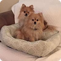 Adopt A Pet :: Greta & Georgie - Whittier, CA