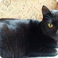 Adopt A Pet :: Trouble - Kelso/Longview, WA