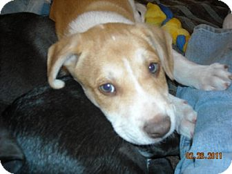 Husky Mix Puppy for adoption in Pipe Creed, Texas - Happi & Harry