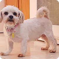 Adopt A Pet :: Bonnie - Prole, IA