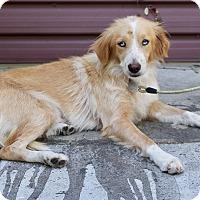 Adopt A Pet :: Cucumber - Los Angeles, CA