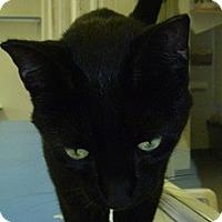 Adopt A Pet :: Si - Hamburg, NY