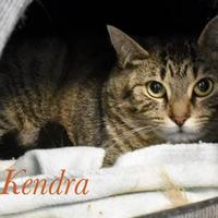 Adopt A Pet :: Kendra - Port Hope, ON