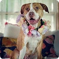 Adopt A Pet :: Sandy - Fort Wayne, IN