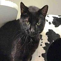 Adopt A Pet :: NAMI - Hampton Bays, NY