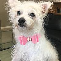 Adopt A Pet :: Jasmine - Pleasanton, CA