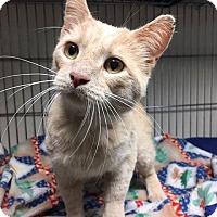 Adopt A Pet :: Nilla - Frankfort, IL