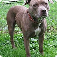Adopt A Pet :: Calico - New Kensington, PA