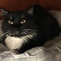 Adopt A Pet :: A444402 - San Antonio, TX