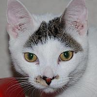 Adopt A Pet :: Wonton - Philadelphia, PA