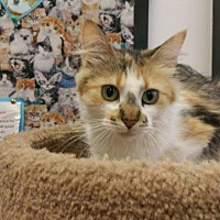 Adopt A Pet :: Pepper - Chaska, MN
