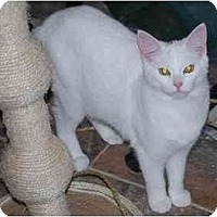 Adopt A Pet :: Cosmo - Richmond, VA