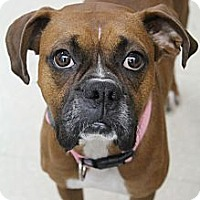 Adopt A Pet :: Dixie - Wytheville, VA