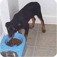 Adopt A Pet :: Zane - Evansville, IN