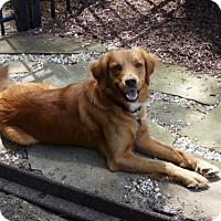 Adopt A Pet :: Jacob - Murrells Inlet, SC