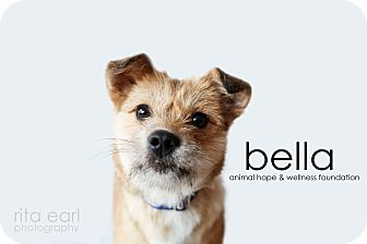 Terrier (Unknown Type, Small) Mix Dog for adoption in Sherman Oaks, California - Bella