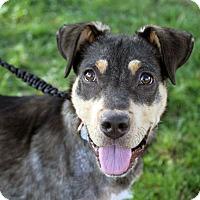Adopt A Pet :: L'Oréal - Joliet, IL