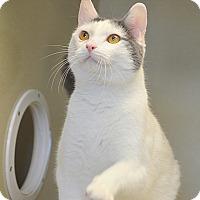 Adopt A Pet :: Monty - San Leon, TX