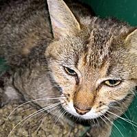 Adopt A Pet :: Zena - Santa Fe, NM