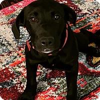 Adopt A Pet :: Rosie - Hagerstown, MD