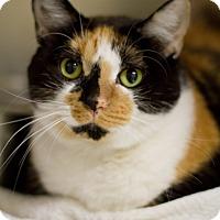 Adopt A Pet :: Cali - Grayslake, IL