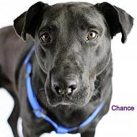 Adopt A Pet :: Chance - Brooklyn Center, MN