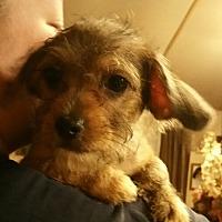 Adopt A Pet :: peanut - springtown, TX