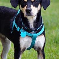 Adopt A Pet :: Brooks - Newport, KY
