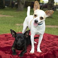 Adopt A Pet :: Frida and Fanny--Sweet bonded dolls--N - Santa Fe, TX