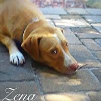 Adopt A Pet :: Zena - Tampa, FL