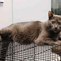 Adopt A Pet :: GANDOLPH - Hampton Bays, NY