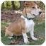 Photo 4 - Dachshund/Corgi Mix Dog for adoption in Mocksville, North Carolina - Tater